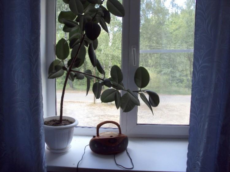 okno-cvetok